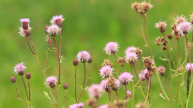 Thistle plant floral on autumn meadow field
