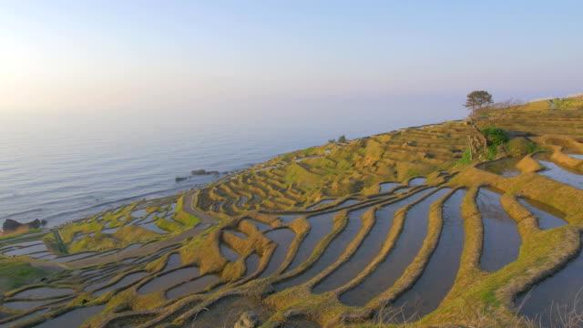 tysiąc ryżu paddies w shiroyone, ishikawa, japonia - taras ryżowy filmów i materiałów b-roll