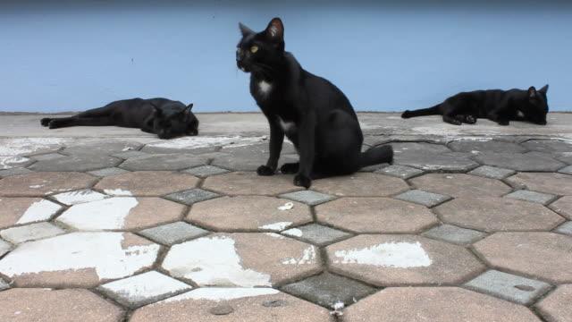 Three black cat to sleep. video