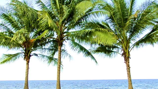 vídeos de stock e filmes b-roll de três coqueiros na frente do oceano - três objetos