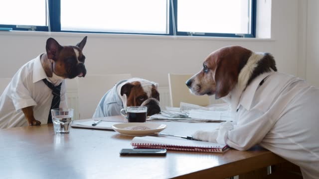 Three dogs having a meeting in a business meeting room Three dogs having a meeting in a business meeting room face to face stock videos & royalty-free footage