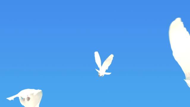tre colombe volare lontano (super rallentatore) - colomba video stock e b–roll