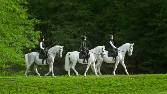 TS Three female riders riding white horses by the lake