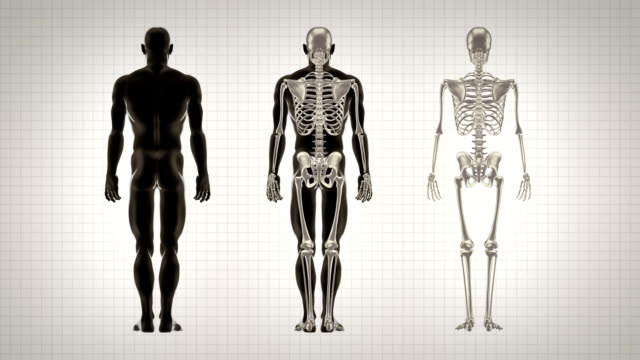 Three full length human bodies alpha matte black white background video