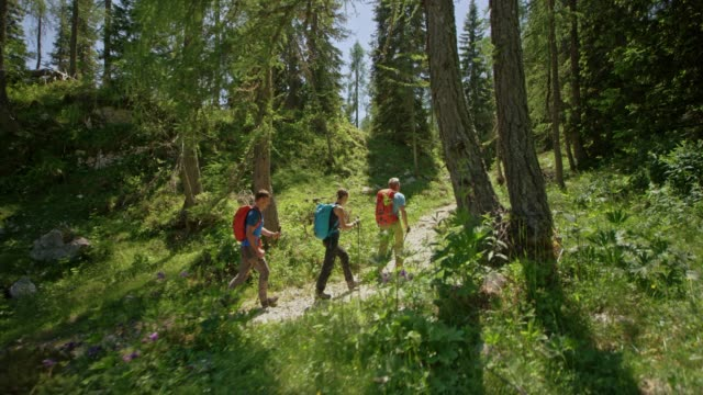 three hikers walking on a path through a mountain forest in sunshine - trekking video stock e b–roll