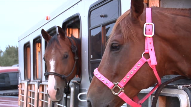 Three horses in trailer video