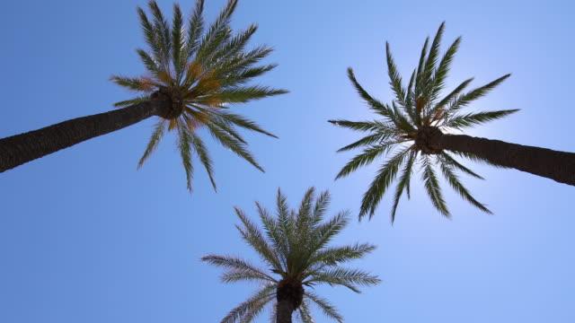 vídeos de stock e filmes b-roll de three palms against sun - três objetos