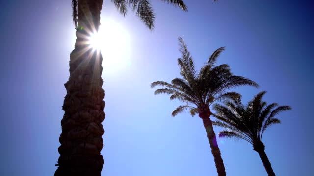vídeos de stock e filmes b-roll de three palms twist in the sunlight - três pessoas