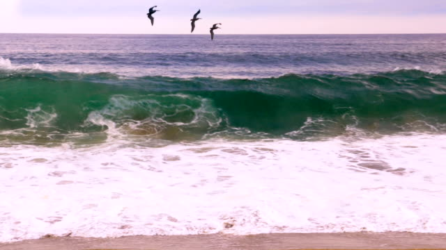 Three pelicans fly over a large ocean wave crashing against the shore -slomo Three pelicans barely escape flying over a large ocean wave crashing against the shore in slow motion pelican stock videos & royalty-free footage
