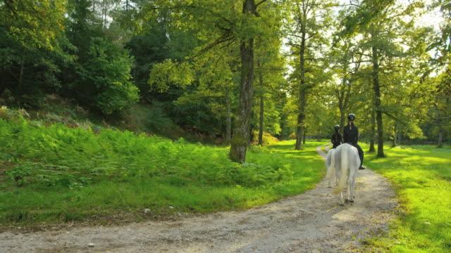 stockvideo's en b-roll-footage met cs drie mensen rijden paarden op forest road - 30 39 jaar