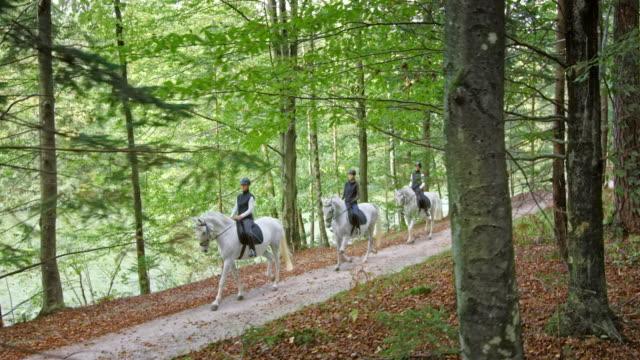 森林道路で馬に乗っている ts 3 人 - 動物に乗る点の映像素材/bロール