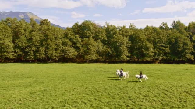 antenna tre persone in sella a cavalli bianchi in esecuzione attraverso il prato - andare a cavallo video stock e b–roll