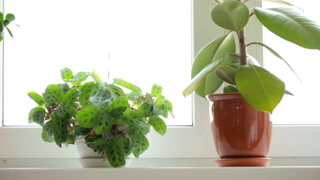 Three pot plants on windowsill video