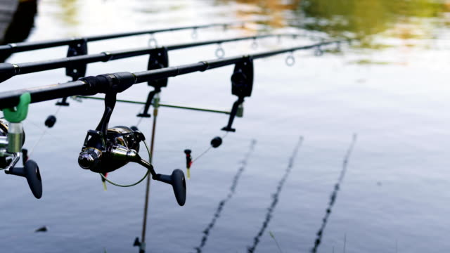Three professional fishing rod waiting for bites on water river Three professional fishing rod waiting for bites on water river. Beautiful close-up landscape fishing rod on tranquil water river. Focus on the reel fishing rod stock videos & royalty-free footage
