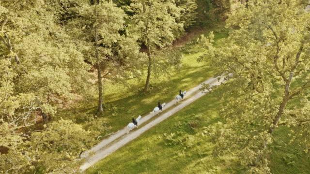 aerial three riders on white horses below the tree tops - attività equestre ricreativa video stock e b–roll