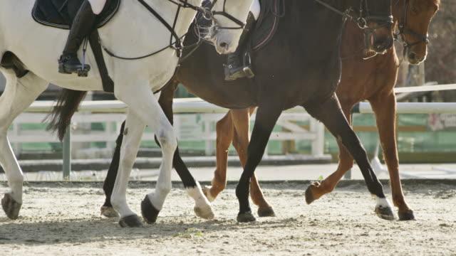 slo mo ts tre travhästar i solig arena - racehorse track bildbanksvideor och videomaterial från bakom kulisserna