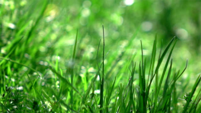 Three videos of grass swinging on the wind-real slow motion Three high quality videos of grass swinging on the wind in real 1080p slow motion 250fps grass area stock videos & royalty-free footage