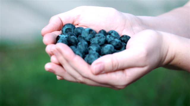 Three videos of hands holding blueberries in real slow motion video