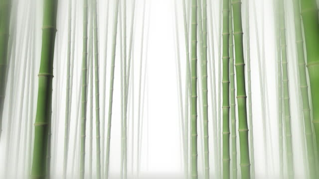 Through Bamboo Forest video