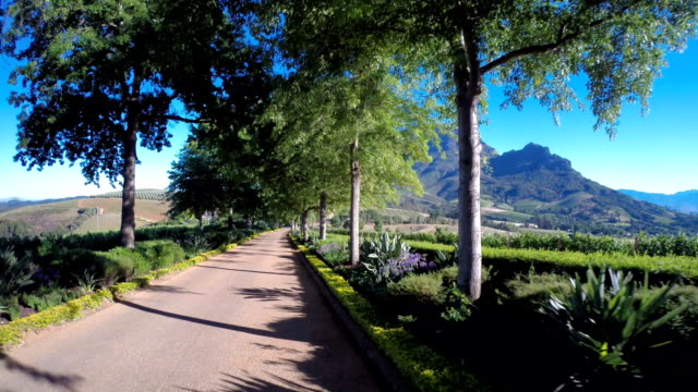 Through the Winelands video