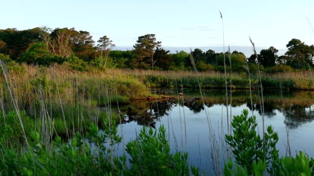 tidal marsh land eastern shore of virginia national wildlife refuge - болото стоковые видео и кадры b-roll