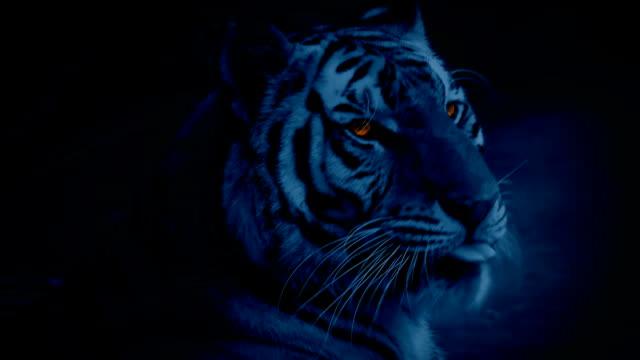 Tiger bei Nacht mit strahlende Augen – Video
