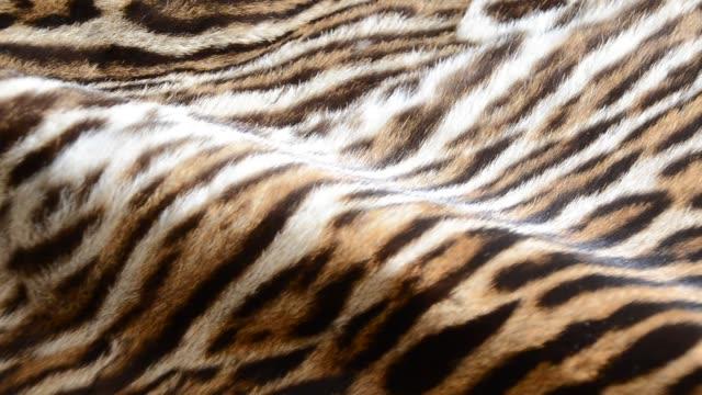 vídeos de stock, filmes e b-roll de pele de tigre - felino