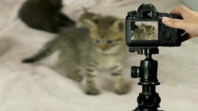 Tiger striped and black kittens on pink blanket, viewed through camera