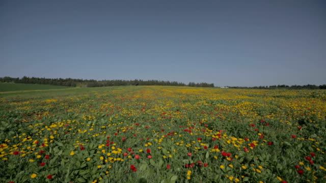 наклон вниз снимок красный и желтый цветок поле - дубовый лес стоковые видео и кадры b-roll