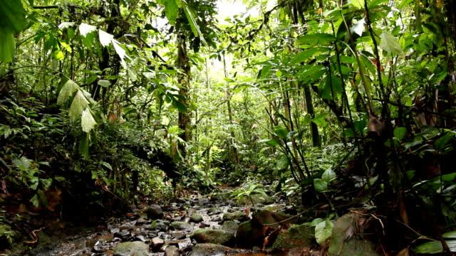 Tilt down to a rainforest waterfall video