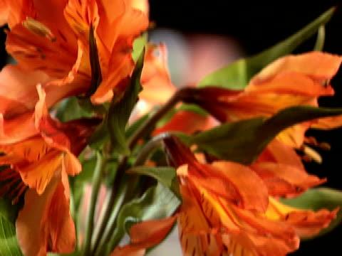 vidéos et rushes de inclinaison de grains de café brun profond - composition florale