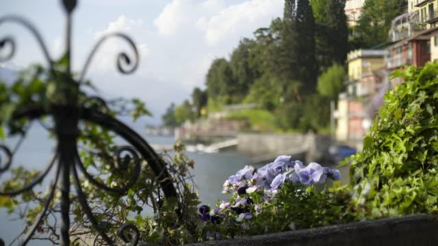 街に咲く花のティルト シフト表示 - 花壇点の映像素材/bロール