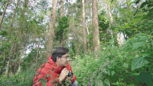 Tilt up shot of Man Photographing Flower in  Pine Forest video