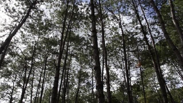 夏風の中で4kチルトアップショットツリーの葉。 - 中林大樹点の映像素材/bロール