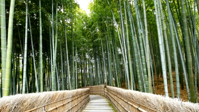 Tilt up view of Bamboo forest, Arashiyama, Kyoto, Japan video