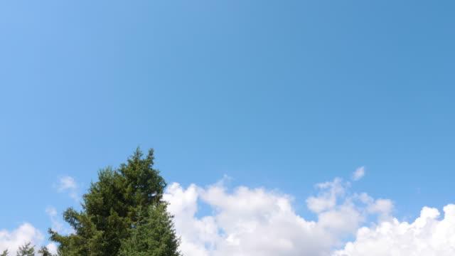 從藍天向空的寧靜山谷的傾斜的看法與冷杉樹和山 - 亞洲中部 個影片檔及 b 捲影像