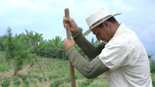 tilt view of farmer digging a hole with a shovel to plant coffee - coffee farmer video stock e b–roll