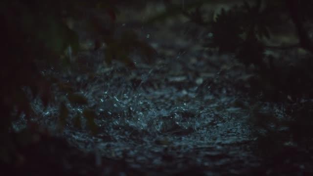 vídeos de stock e filmes b-roll de tilting down shot of raindrops falling past plants and splashing into a puddle - poça