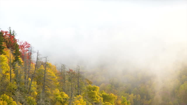 Tilting-up from Autumn Foliage through Mist to Land in Sky video