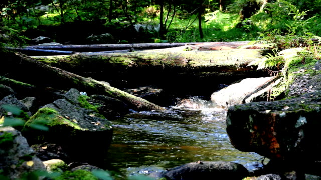 timber bridge video