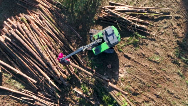Timber harvester cutting and sorting logs.