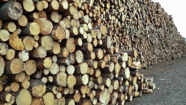 vidéos et rushes de industrie du bois bûches de déforestation - bois texture