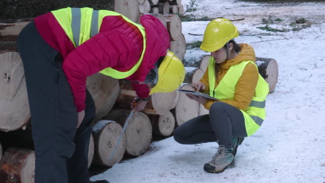 Timber industry. Engineers measuring and calculating the log volume. Organising the transport issues. Taking measures for the reforestation of the woodlands.