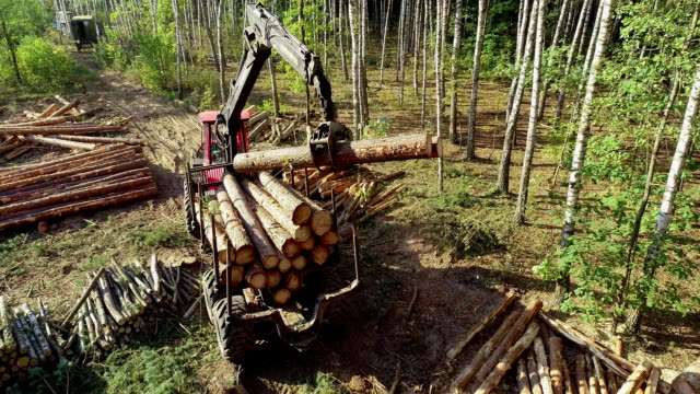 목재 로딩, 트럭에 로딩 로그, 목재 가공, 삼림 벌채, 발톱으로 목재 적재 - 환경 피해 스톡 비디오 및 b-롤 화면