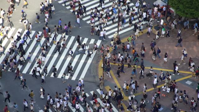 Time Lapse Aerial view of Shibuya Crossing in Tokyo, Japan video