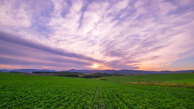 hd 時間の経過: 美瑛の丘風景夕日, 美瑛, 北海道, 日本 - 絶景点の映像素材/bロール
