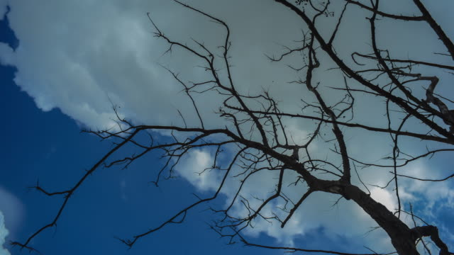 Time lapse branches silhouette on sky and cloud backgrounds. video