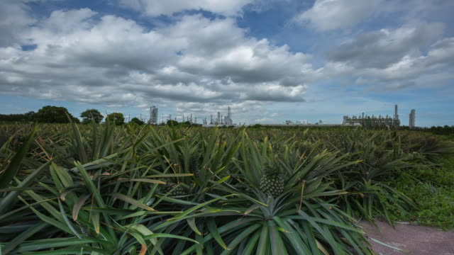 Time Lapse Chemical plant in the cloud sky at pineapple plantations foreground, Impact on the Environment concept. video