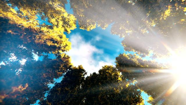 vídeos de stock, filmes e b-roll de lapso de tempo nuvens noite a dia sobre o círculo de árvores de outono, zoom em - setembro amarelo