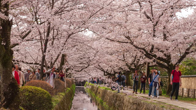 vídeos de stock e filmes b-roll de 4k time lapse: crowded people at the philosopher's path, looking at sakura (cherry blossom) and taking photo. - filosofia